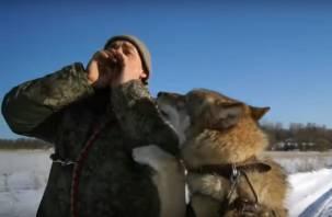 Видео жизни домашнего волка в смоленском собачьем приюте попало в Сеть