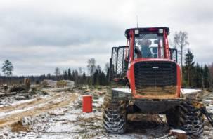 Немецкая газета рассказала о масштабных вырубках леса на Смоленщине