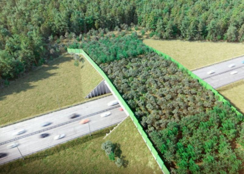 В Смоленской области на трассе М-1 построят эко-переход для животных