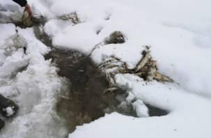 Отравление реки Гжать хотят списать на погоду. Федеральные журналисты провели свое расследование