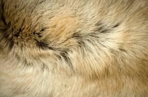 В шерсти животных ученые нашли запрещенные вещества