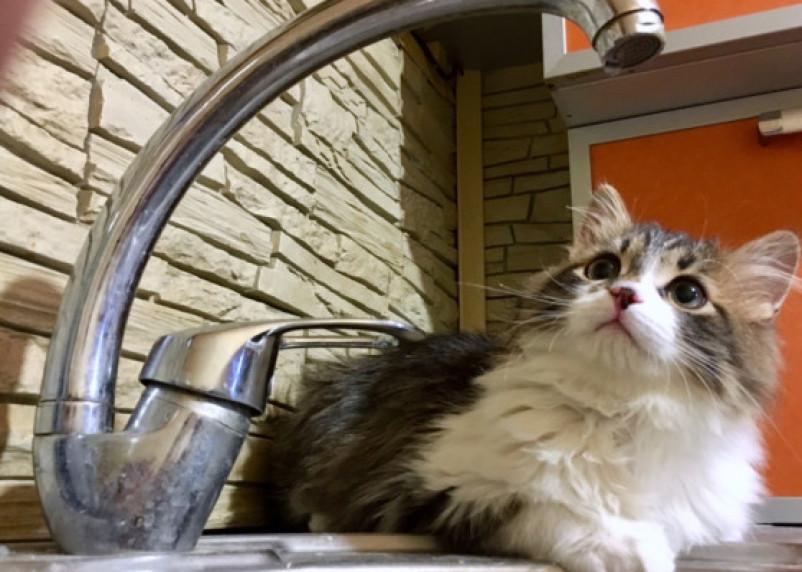 Холодную воду отключат в садах, школе и домах Смоленска