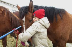 Жеребенку Карату из Смоленской области подарили шанс на жизнь