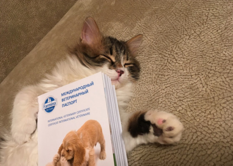 Медик рассказал об опасности кошачьих царапин