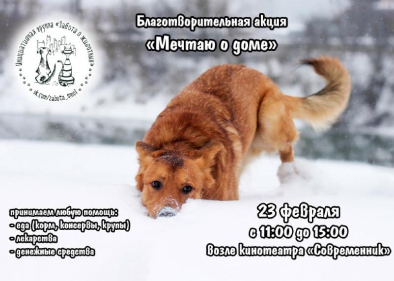 В Смоленске пройдёт благотворительная акция «Мечтаю о доме»