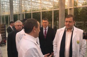 Управляющий Смоленским отделением ПАО Сбербанка посетил тепличный комбинат «Смоленский»