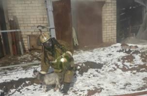 Молодцы – и соседи, и пожарные. В Сети появились фото спасения из огня животных в Смоленске