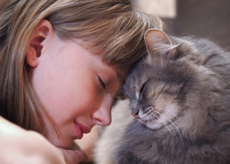 Несколько минут общения с животными снижают уровень стресса