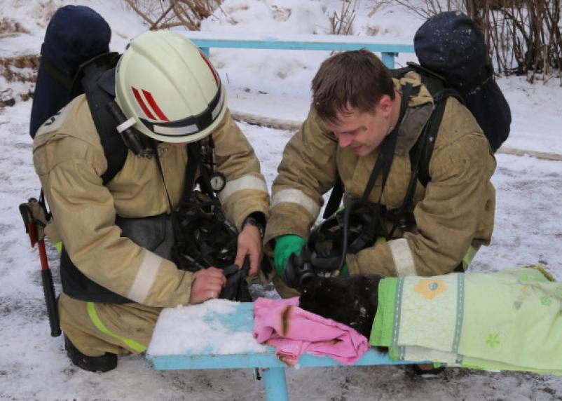 Как спасали Дымка. В Смоленске кота откачали кислородной маской, наши спасатели прославились на всю страну