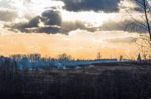 Более 73 гектар. На Смоленщине продолжает гореть сухая трава