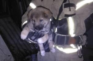Маленькая жизнь. В Смоленске пожарные спасли щенка