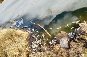 Смоляне обнаружили в Реадовском озере множество погибшей рыбы