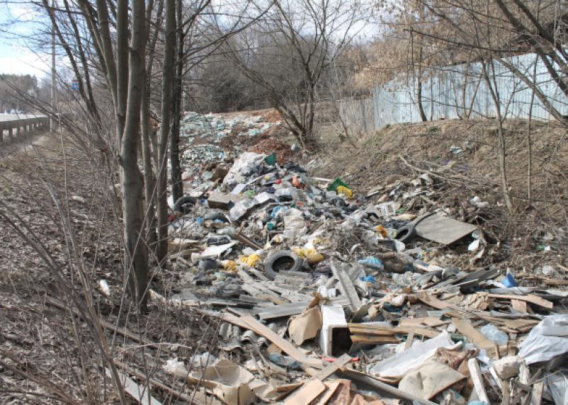 Заросли свалками. Витебское шоссе утопает в мусоре