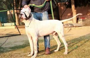 Министерство внутренних дел сократило список опасных пород собак
