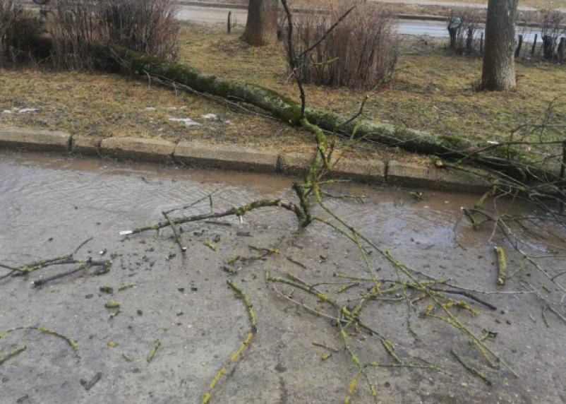Штормовой ветер в Смоленске сносит все на своем пути