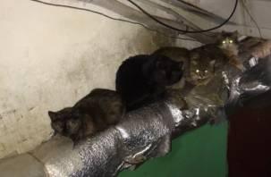 Вязьмичка устроила в подъезде приют для бездомных котов