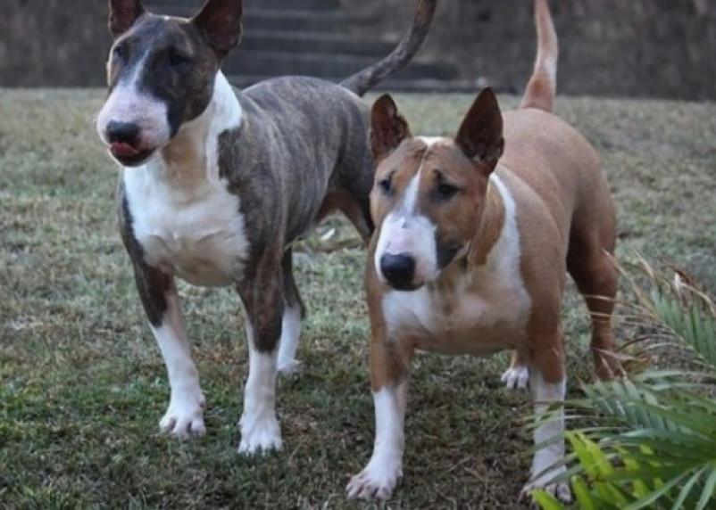 МВД составило и опубликовало полный список опасных собак
