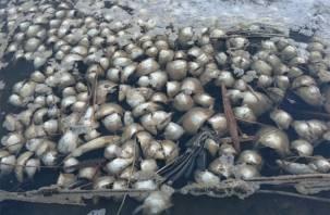 Крик с берегов реки Гжать. Экологическим бедствием занимается Следственный комитет