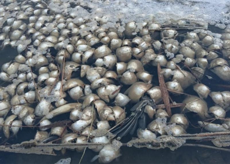 Очередная экокатастрофа. Консервный комбинат в Гагарине заподозрили в сливе нечистот в Гжать