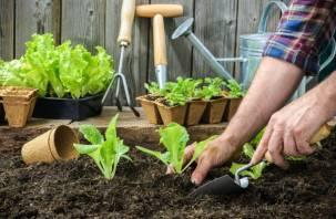 Как заниматься огородом, не навредив организму