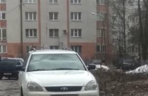 В Смоленске ветка дерева повредила автомобиль
