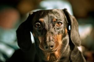 Какие породы собак чаще кусаются, рассказали кинологи