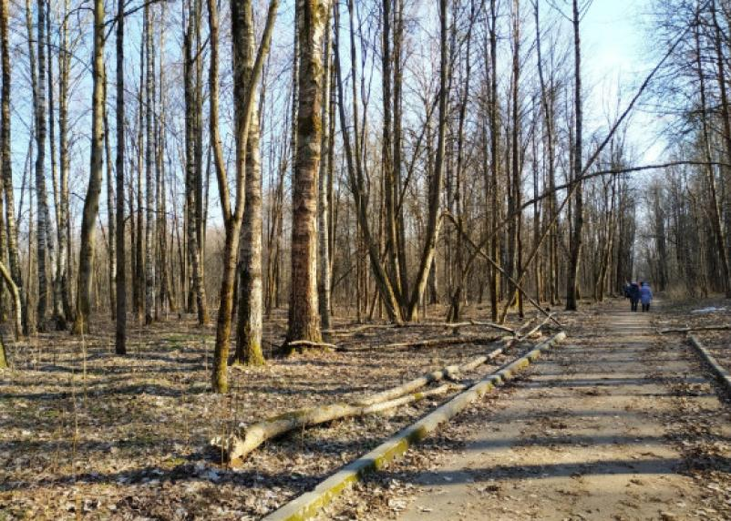 Парк в Реадовке превратился в заброшенную непроходимую чащу