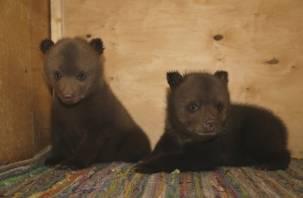 Смоляне спасли двух медвежат