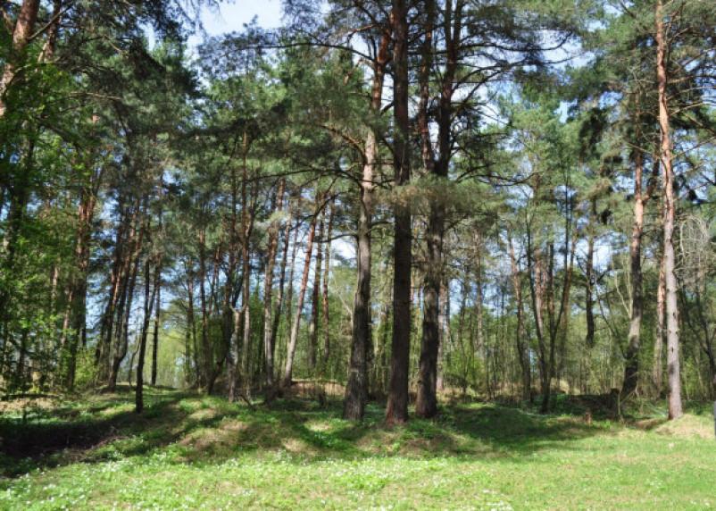 Хотел построить дамбу. На территории Гнездовского археологического комплекса вели незаконные земляные работы