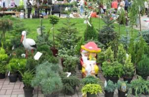 Смоленских дачников приглашают на ярмарку «Сад-огород»