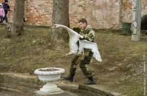 Лебеди вернулись в смоленский городской пруд