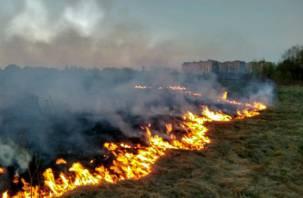 Пожарные на месте. Под Смоленском крупное возгорание сухой травы