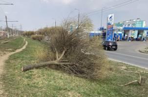 Варвары уничтожили две ивы на улице Маршала Еременко