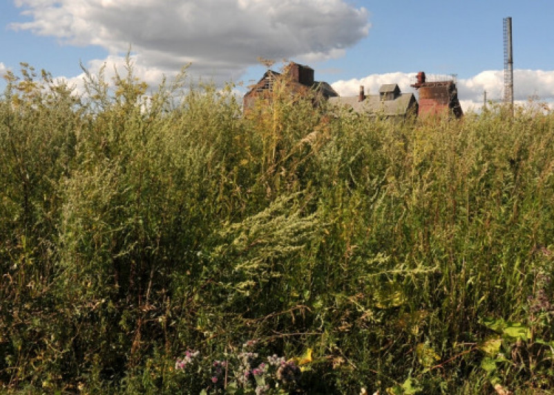 В Смоленской области ввели в сельхозоборот 221 гектар зараставших земель