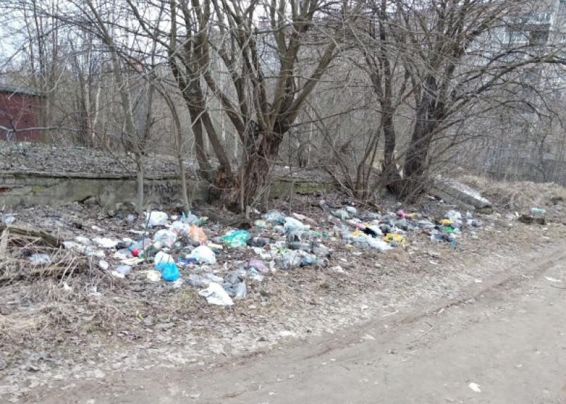 Территории вокруг смоленских школ зарастают мусором