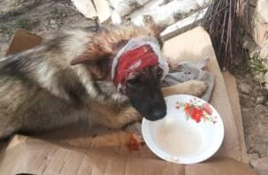«Ему проломили голову молотком соседи». Рославльчане спасают покалеченного пса