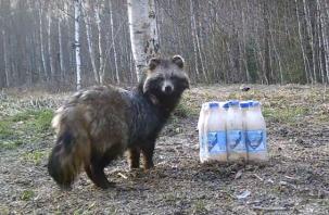 Забавные попытки животных из «Смоленского Поозерья» открыть сгущенку попали на видео