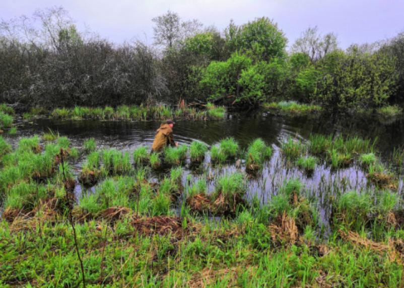Кричал о помощи. В Рославльском районе мужчина едва не утонул в болоте