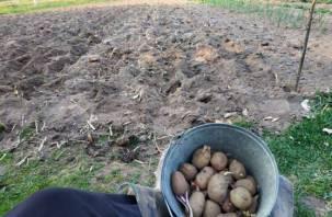 Разрешат ли россиянам сажать картошку