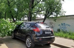 В Смоленске на машину рухнуло дерево