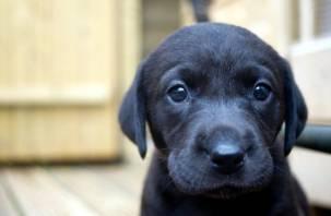 Кинологи дали советы россиянам по выбору щенка