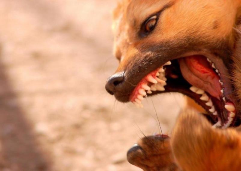 Соцсети: на Смоленщине собаку загрызли на глазах у ребенка