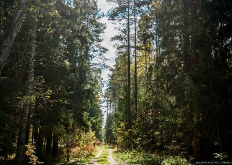 В лесу под Смоленском отыскали потерявшуюся девочку