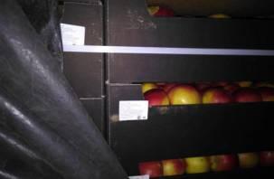 Замаскировали утеплителем. На Смоленщину пытались ввезти 40 тонн яблок