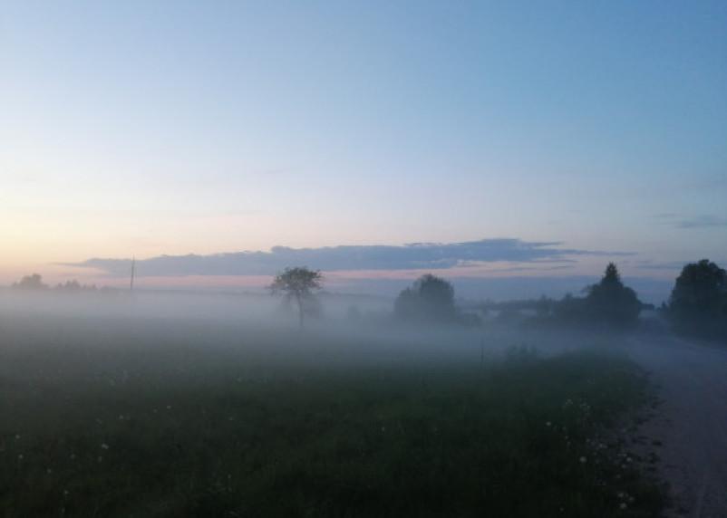 Слабый ветер и туман. В пятницу на Смоленщине будет тепло