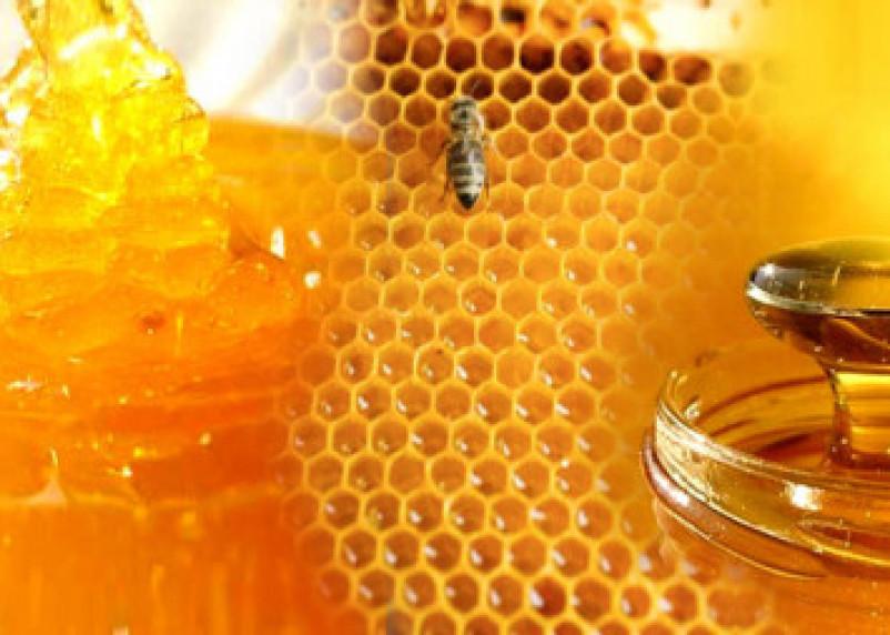 Ученые выяснили, что мед эффективнее лекарств