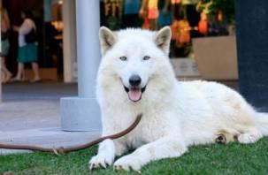 Теперь официально. Список потенциально опасных собак МВД сократило до 12 пород