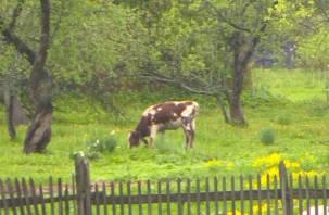 Смоленские полицейские спасли корову из болота