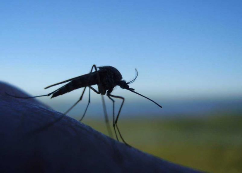 Кто здесь самый вкусный: специалисты разобрались в предпочтениях комаров