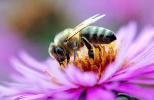 В 14 регионах массово гибнут пчёлы. Смоленская область вошла в их число